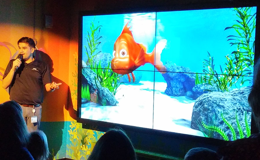 Georgia Aquarium: 2x2 Video Wall with Touch Overlay